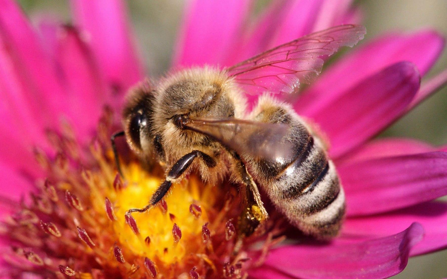 Pollinators In Peril