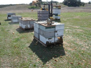 Honey boxes and our fork lift
